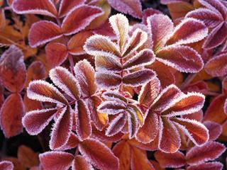 Winter_Leaves.jpg
