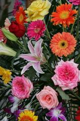 LQ8Y6829.--fleur-de-chine.p.jpg