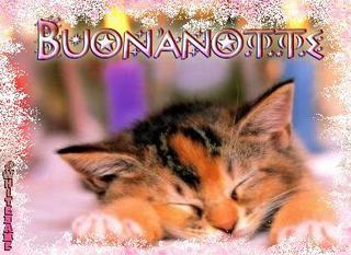 buonanotte-cat.jpg