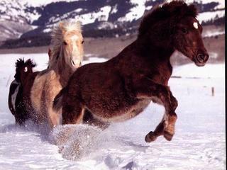 cavalli011.jpg