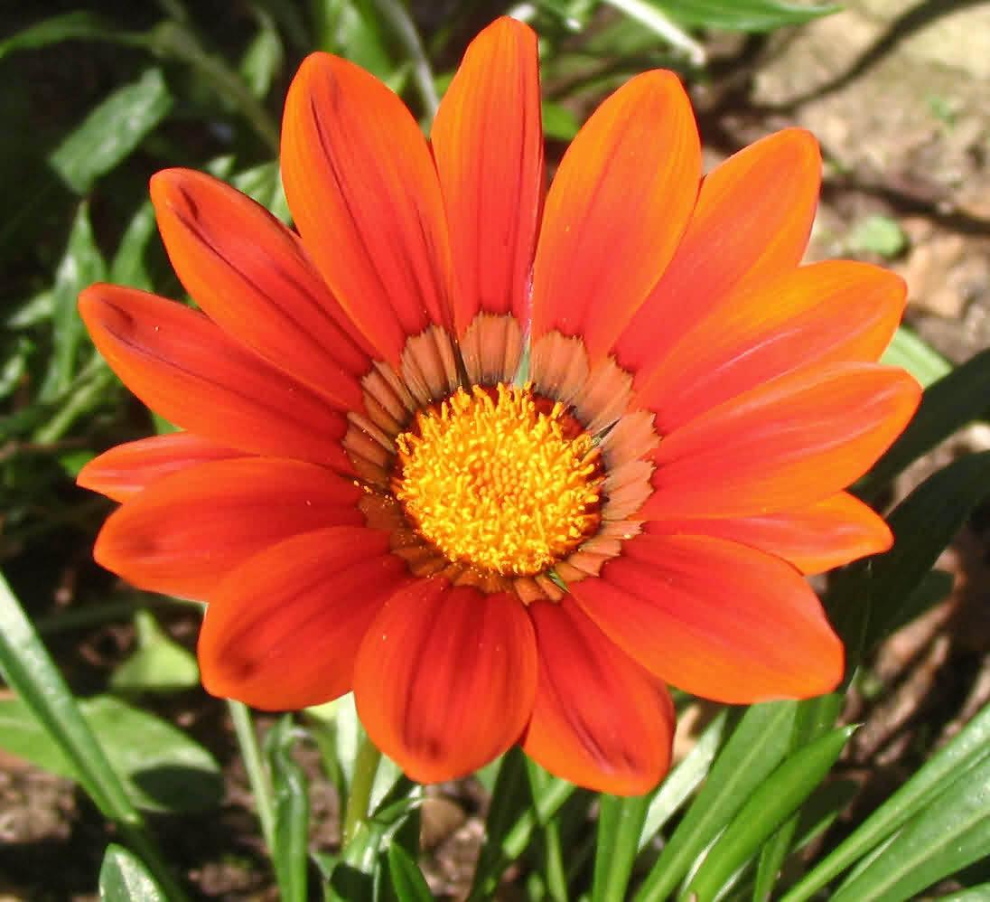 fiore_arancio.jpg