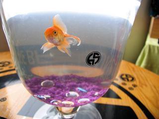 H05_fish.jpg