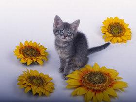 CAT03RK019904.jpg